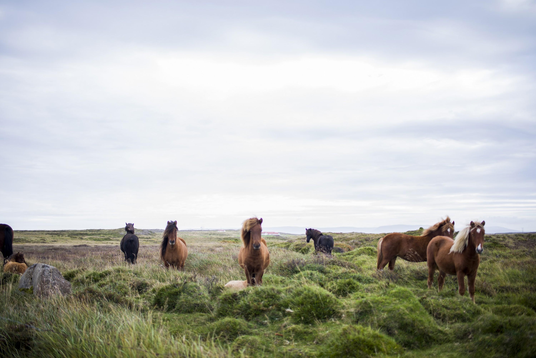 Equestrian hypnotherapy